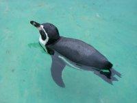 Hagenbecks Tierpark Pinguine